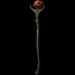 Rosa di Sanguine (Sanguine Rose)